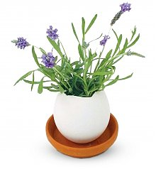 Gift Services Warehouse: Lavender Eggling